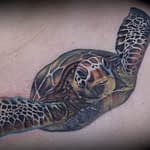 Emily Graven Tattoo Artist color turtle