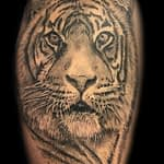 Lisa DeLauder Tattoo Artist black and grey tiger