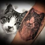 Lisa DeLauder Tattoo Artist black and grey domestic cat